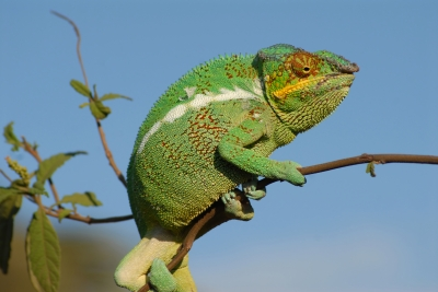 Are you true to yourself or are you a chameleon?